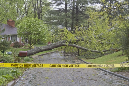 fallen tree on road with caution tape
